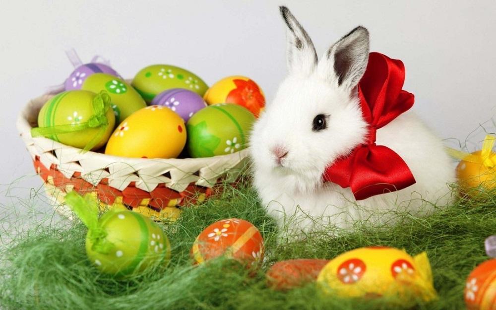 easter-bunny-best