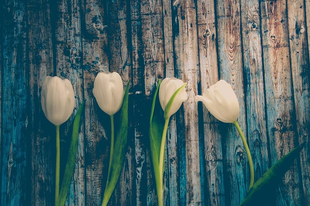 bloom-blossom-flora-612807